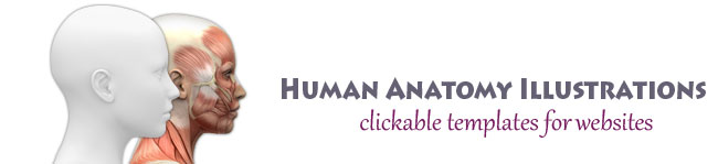 Human Anatomy Illustrations Logo