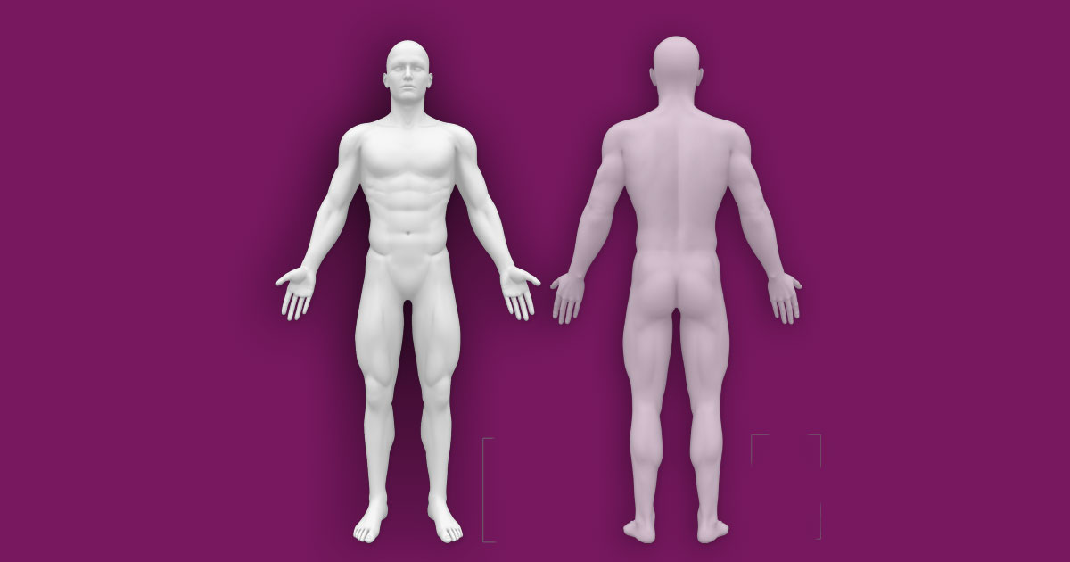 Interactive Human Anatomy Template Front Back