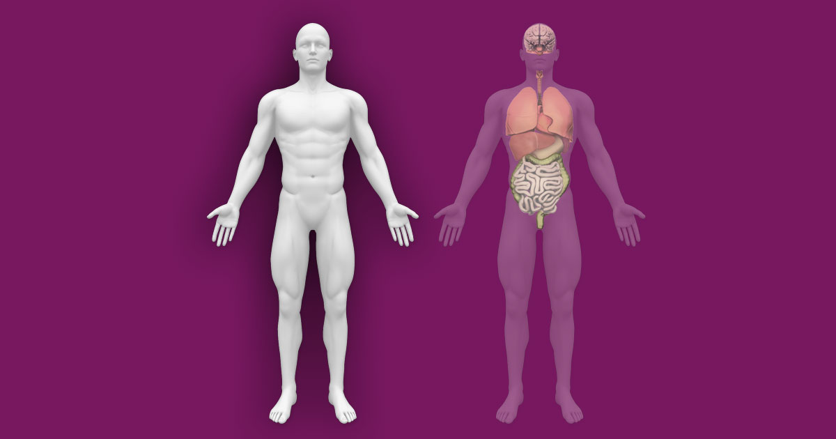 Interactive Human Anatomy Template External Internal