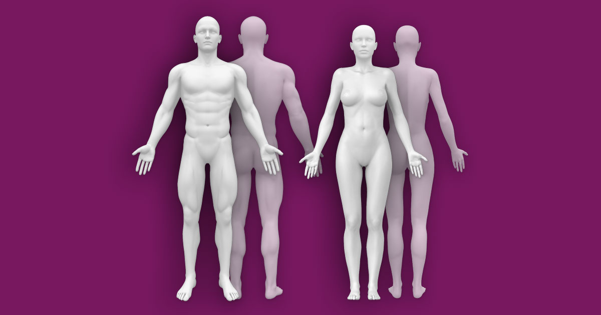 Interactive Human Anatomy Template Male Female Front Back