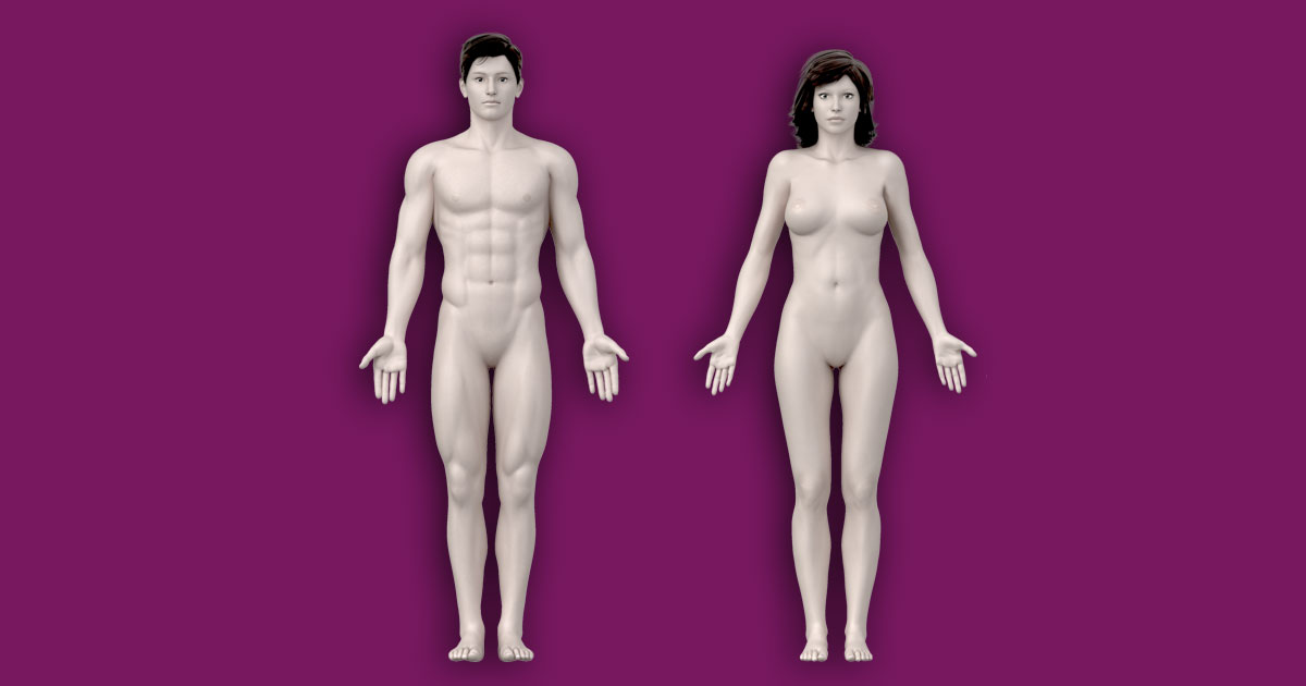 Interactive Human Anatomy Template Male Female