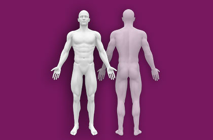 Interactive Male Anatomy - Front / Back