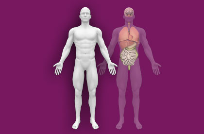 Interactive Human Anatomy - External / Internal