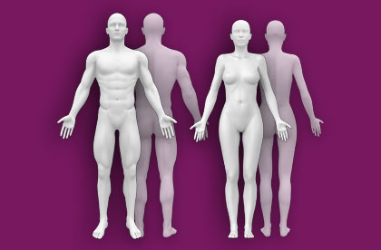 Interactive Human Anatomy - Male / Female - Front / Back