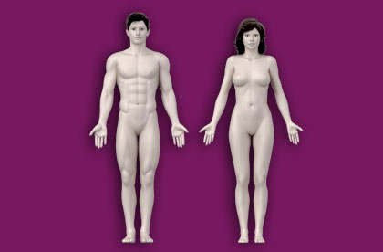 Interactive Human Anatomy - Male / Female